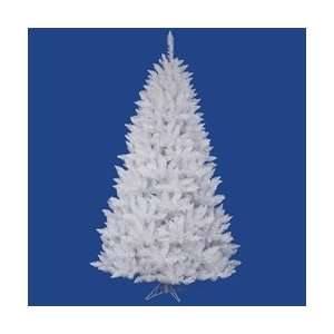 5.5 x 40 White Spruce Tree 159Tips Arts, Crafts