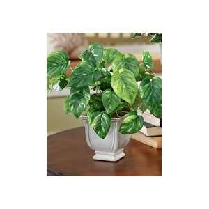 Silk Pothos Ivy Accent